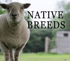 Native breeds